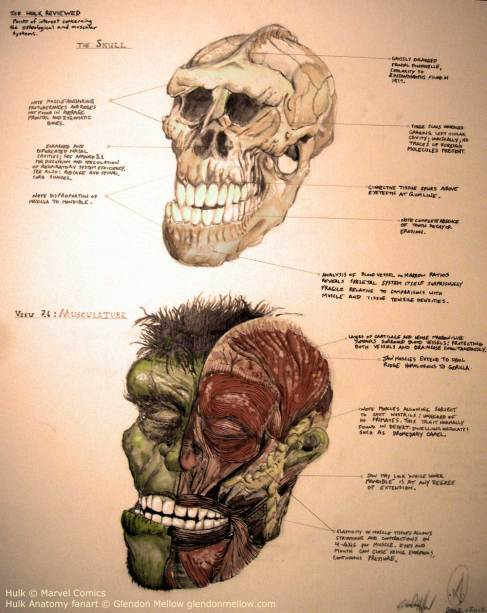 Hulk Skull Anatomy by Glendon Mellow